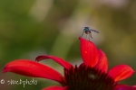 Garden flowers and bugs-6545