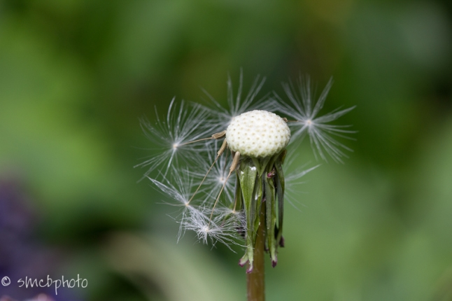 20121027-_MG_2863