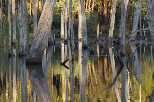 Susie's Lake #2