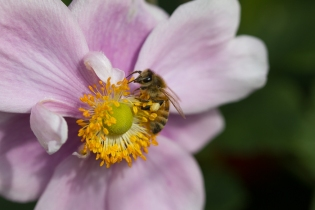 Garden flowers and bugs-6639