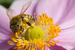 Garden flowers and bugs-6641