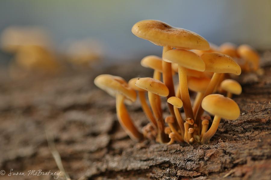 Fungi - f/2.8
