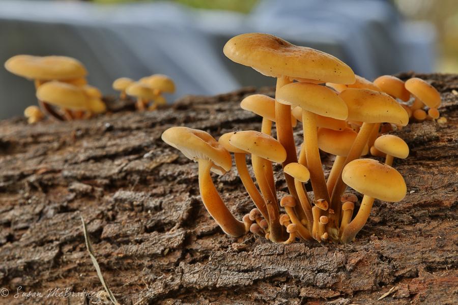 Fungi - f/20
