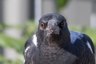 20170305_084159_birds_146a3588