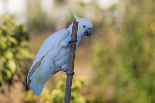 20170308_065154_Birds_146A3677