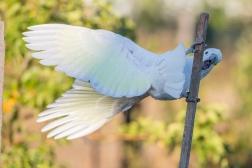 20170308_065208_Birds_146A3688