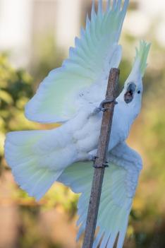 20170308_065210_Birds_146A3690