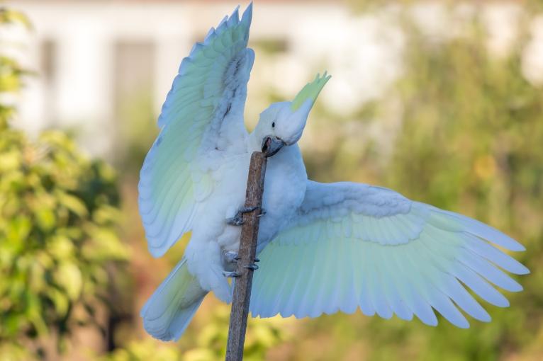20170308_065213_Birds_146A3699