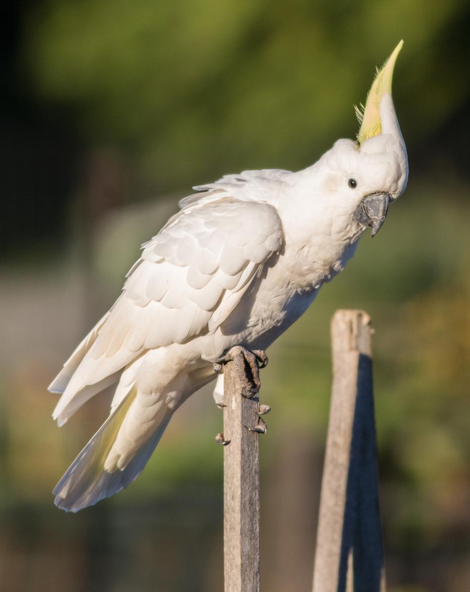 20170308_065255_Birds_146A3717